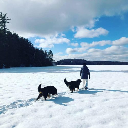 Person walking with two dogs on frozen lake