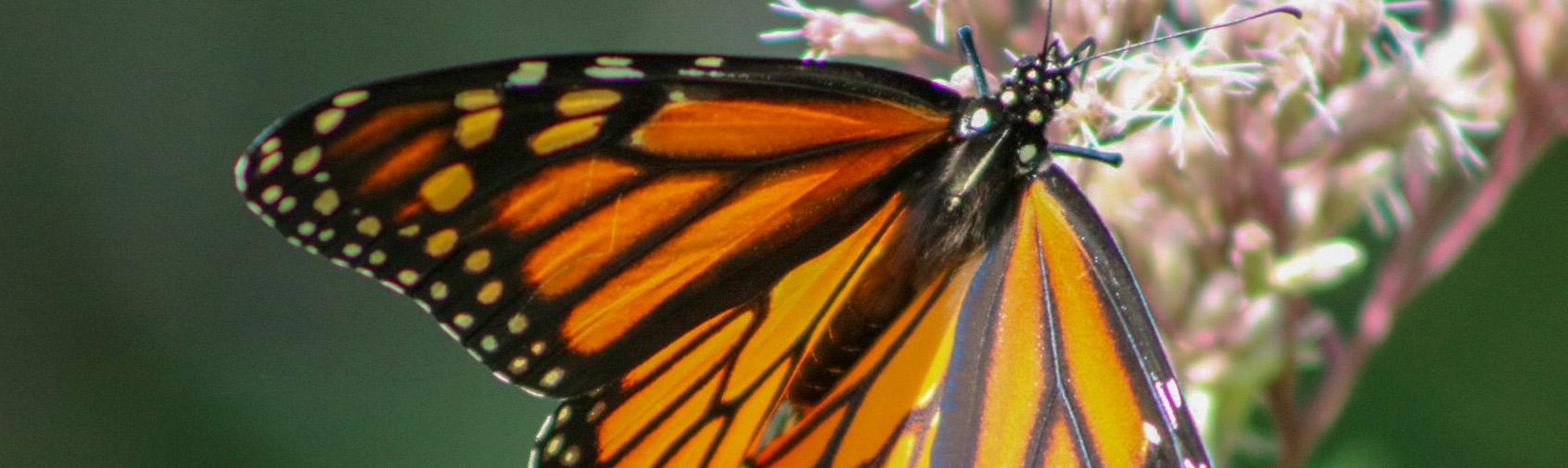 wildlife_Kathy Braznick