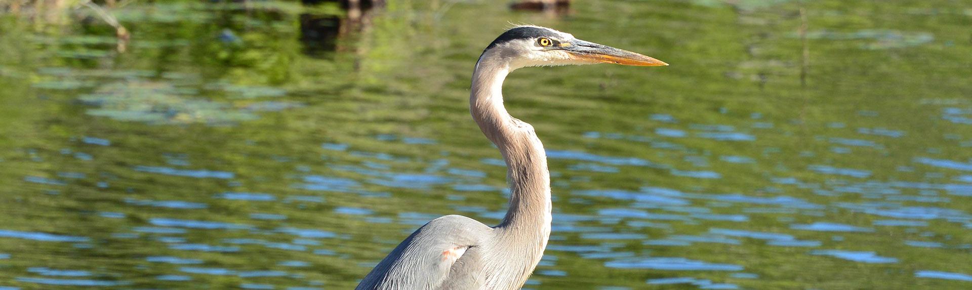 wildlife_Wendy Turk