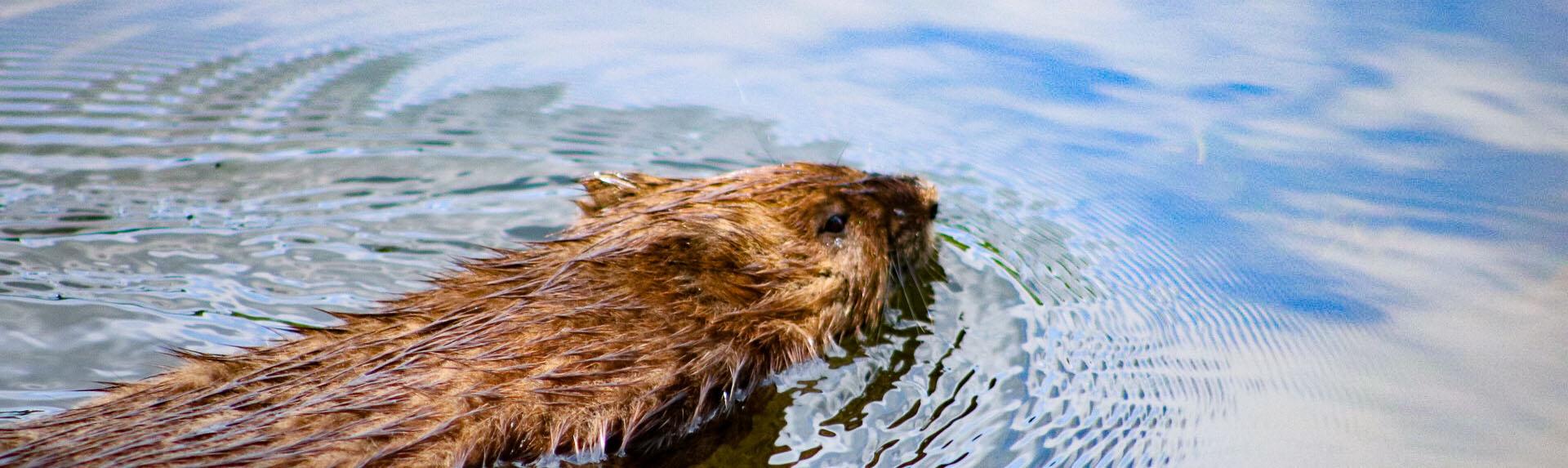 wildlife_Kathy Braznick_mammals