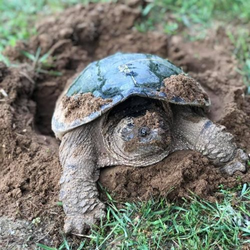 Wendy Turk - Turtle